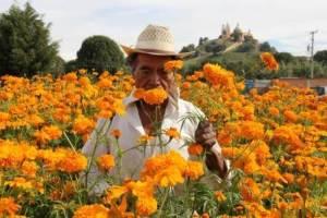 chol flores2